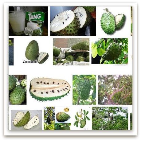 Para que sirve la fruta guanabana