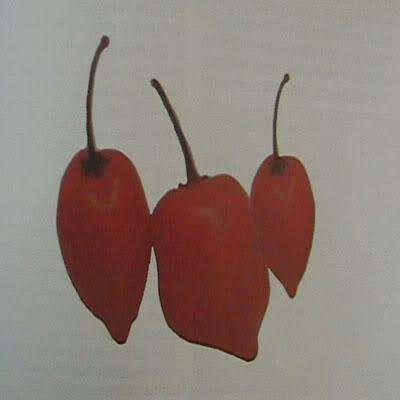 1-chile-habanero