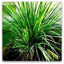 Paja en la hierba - 1 7