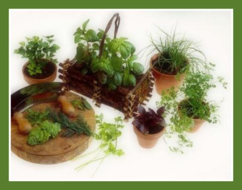 244-planta-tus-hierbas-arom-ticas-para-cocinar