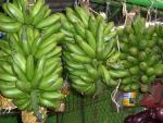 Plátanos latinos